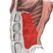 Download Anatomy: Atlas of Muscles 1.1 APK