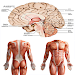Download Anatomy New plus ++ 1.0 APK