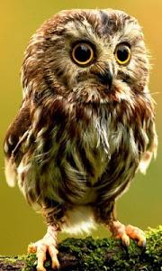 Download Animal Wallpapers Backgrounds Photos 1.0 APK