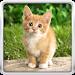 Download Cat Kittens Live Wallpaper 21.0 APK