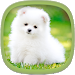 Download Cute Puppy Wallpapers 3.1 APK