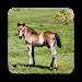 Download Adorable Horse Foal Wallpapers 1.0 APK