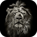 Download Lion King CM Locker Cool Theme 1.1.5 APK