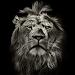 Lion King CM Locker Cool Theme