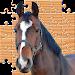 Download Puzzle Horses 1.1 APK