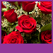 Download Roses Live Wallpapers 1.5 APK