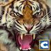 Download Ultimate Tiger Simulator 1.2 APK