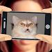 Download What cat am I? 4.4 APK