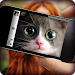 Download What cat are you? Game & Photo Scanner 7.7.72 APK